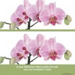 Campagna pubblicitaria stampa e naming: Florpagano e Daddò