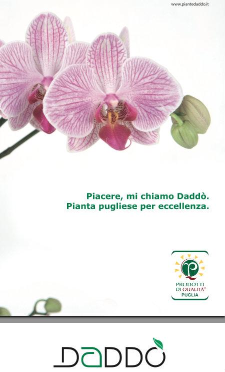copywriter campagna pubblicitaria stampa | raffaelemagrone.it